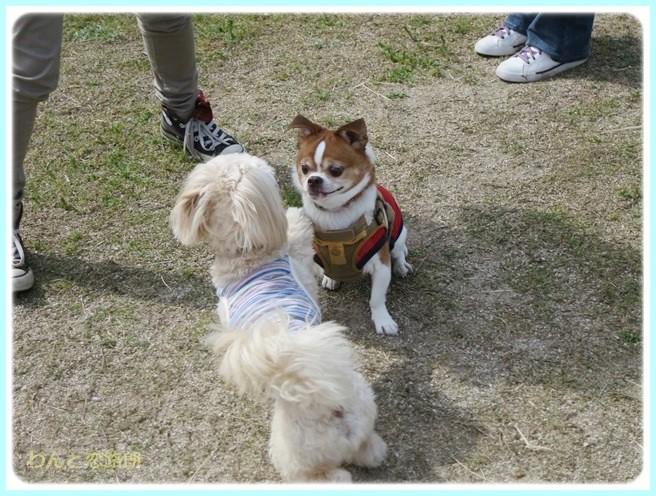 f:id:yasukazu01:20140513200028j:image