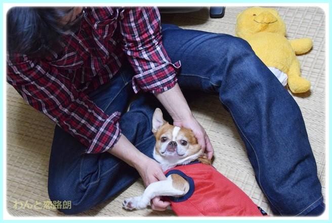 f:id:yasukazu01:20140517200343j:image