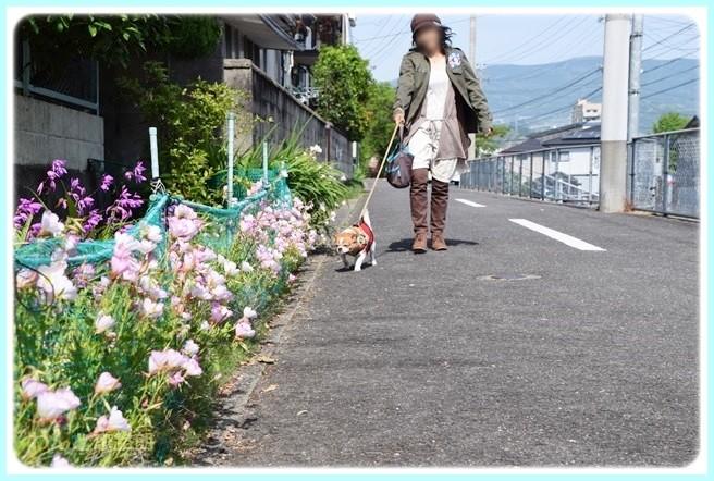 f:id:yasukazu01:20140517200344j:image