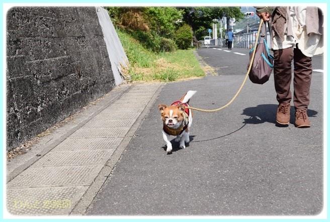 f:id:yasukazu01:20140517200345j:image
