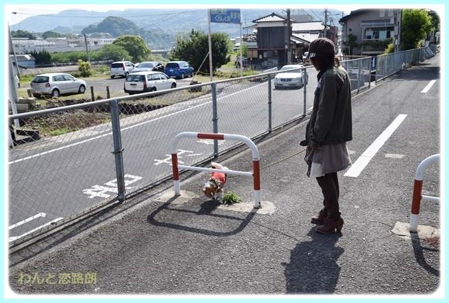 f:id:yasukazu01:20140517200346j:image