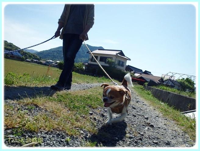 f:id:yasukazu01:20140520200912j:image