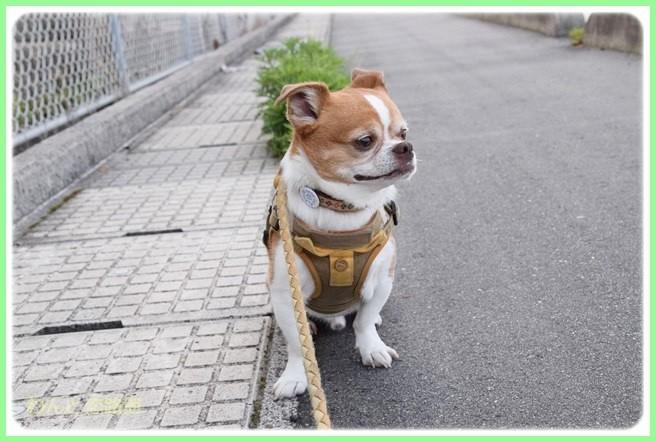 f:id:yasukazu01:20140522105435j:image