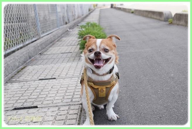 f:id:yasukazu01:20140522105436j:image