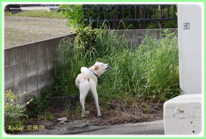 f:id:yasukazu01:20140523222303j:image