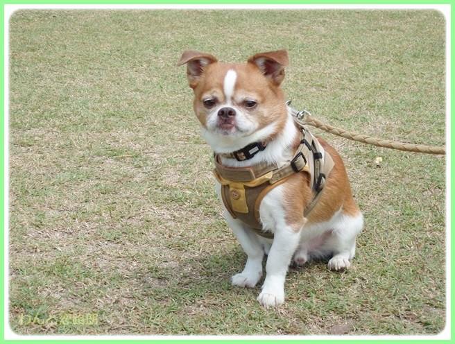 f:id:yasukazu01:20140525200131j:image