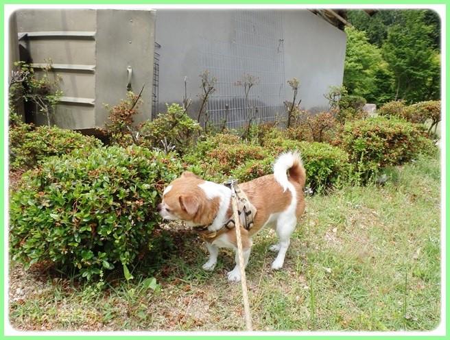 f:id:yasukazu01:20140525200133j:image