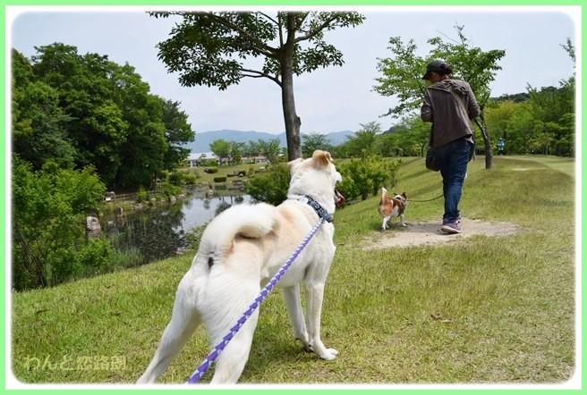 f:id:yasukazu01:20140525202750j:image