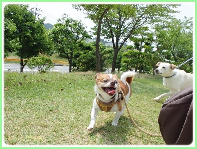 f:id:yasukazu01:20140525202751j:image