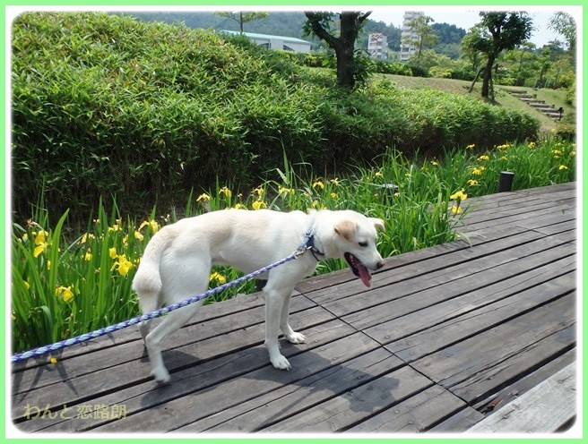f:id:yasukazu01:20140526192939j:image