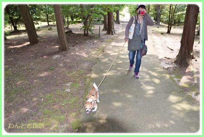 f:id:yasukazu01:20140526192941j:image