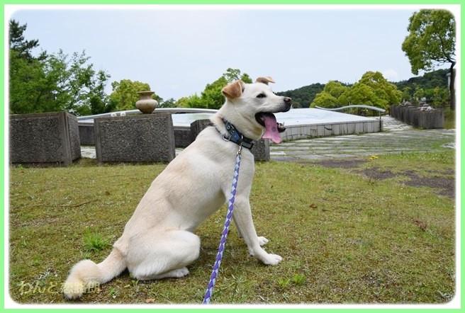f:id:yasukazu01:20140526195417j:image