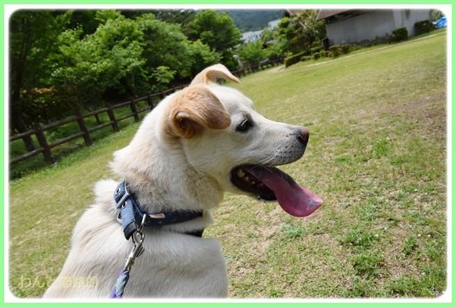 f:id:yasukazu01:20140527222606j:image