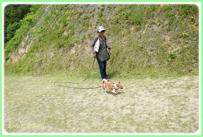 f:id:yasukazu01:20140527222931j:image