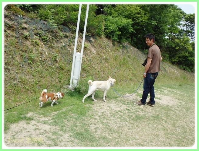 f:id:yasukazu01:20140527223014j:image