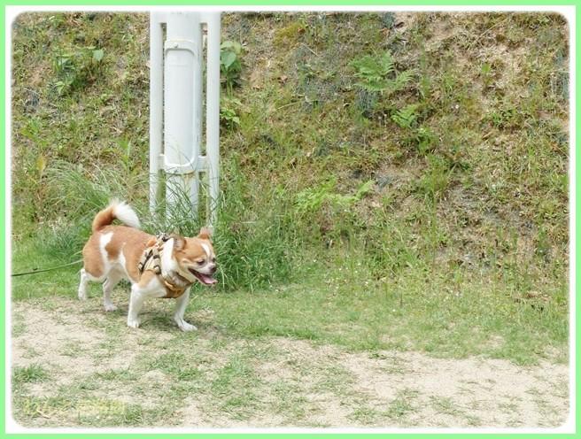 f:id:yasukazu01:20140527223015j:image