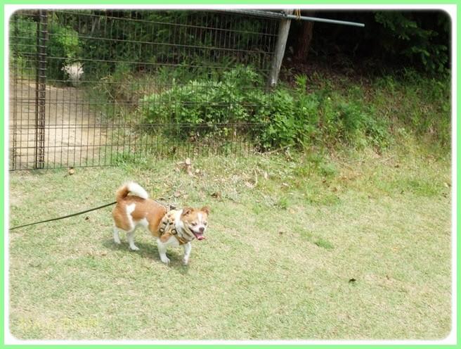 f:id:yasukazu01:20140527223236j:image
