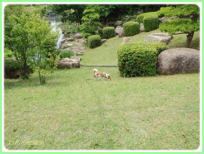 f:id:yasukazu01:20140529201751j:image