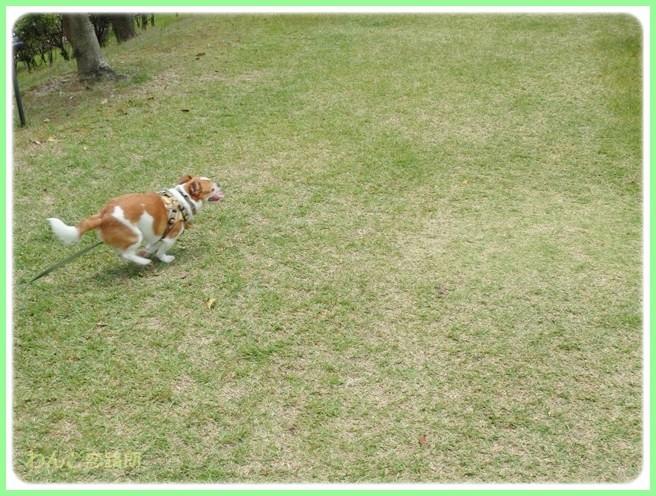f:id:yasukazu01:20140529202136j:image