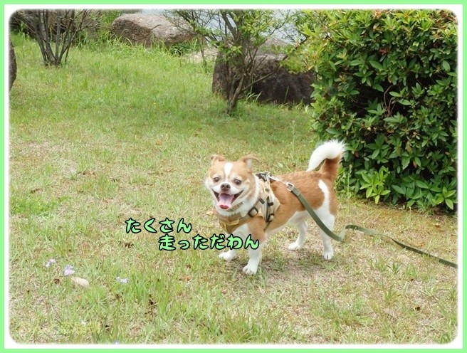 f:id:yasukazu01:20140529202137j:image