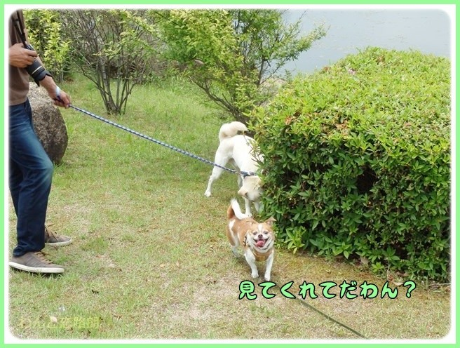 f:id:yasukazu01:20140529202602j:image