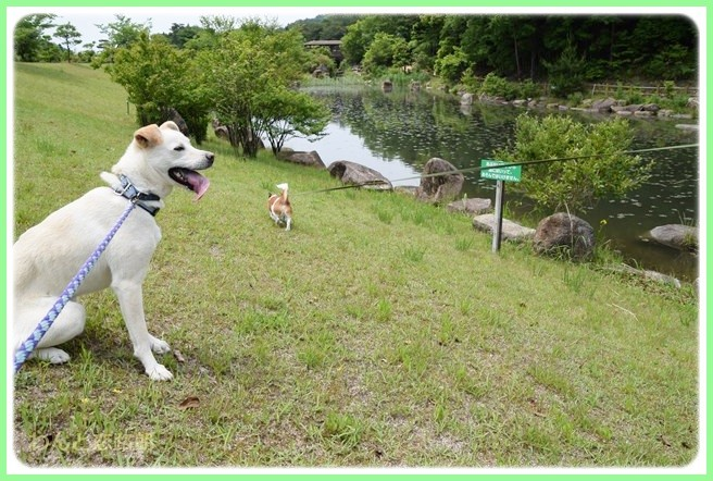 f:id:yasukazu01:20140529202604j:image
