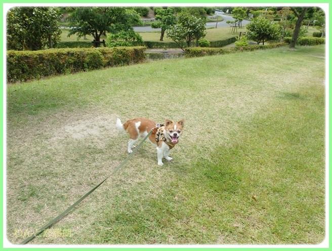f:id:yasukazu01:20140529202605j:image