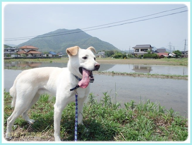 f:id:yasukazu01:20140530095931j:image