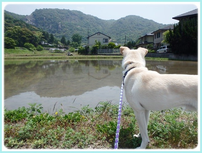 f:id:yasukazu01:20140530095932j:image