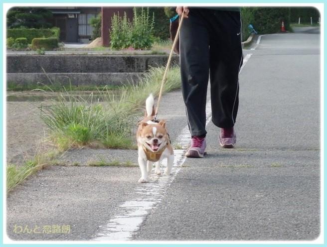 f:id:yasukazu01:20140530095941j:image