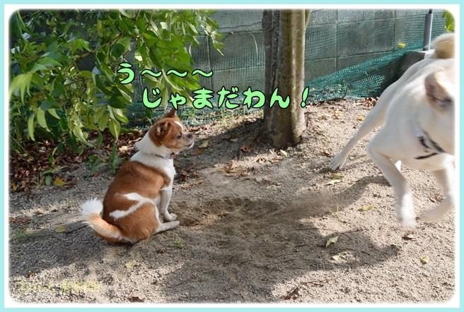 f:id:yasukazu01:20140602221009j:image