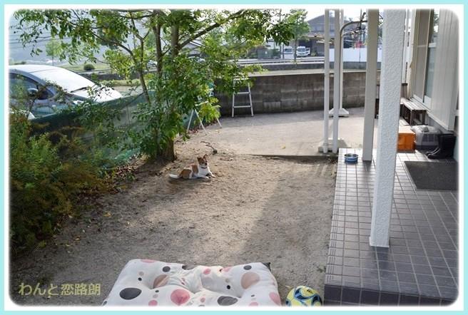 f:id:yasukazu01:20140602221014j:image