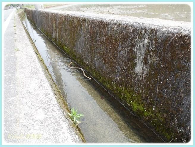 f:id:yasukazu01:20140603211644j:image