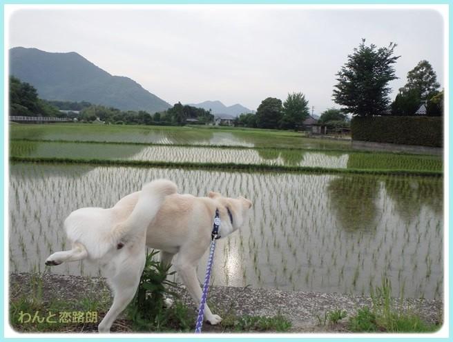 f:id:yasukazu01:20140603212621j:image