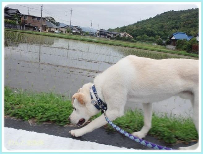 f:id:yasukazu01:20140604204150j:image