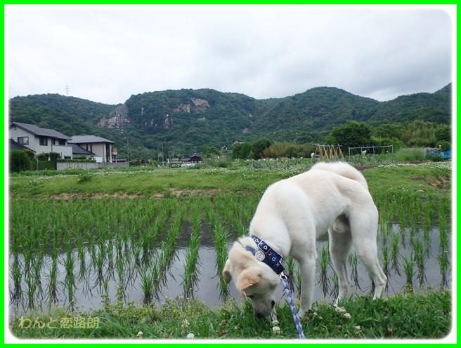 f:id:yasukazu01:20140606203347j:image