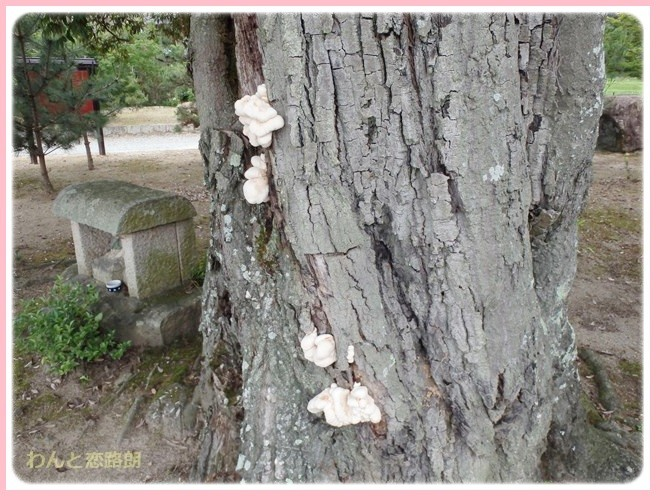 f:id:yasukazu01:20140609202509j:image