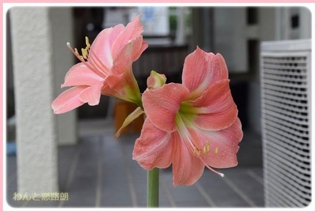 f:id:yasukazu01:20140609203149j:image