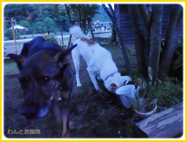 f:id:yasukazu01:20140613224810j:image