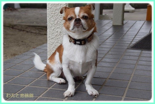 f:id:yasukazu01:20140616205324j:image