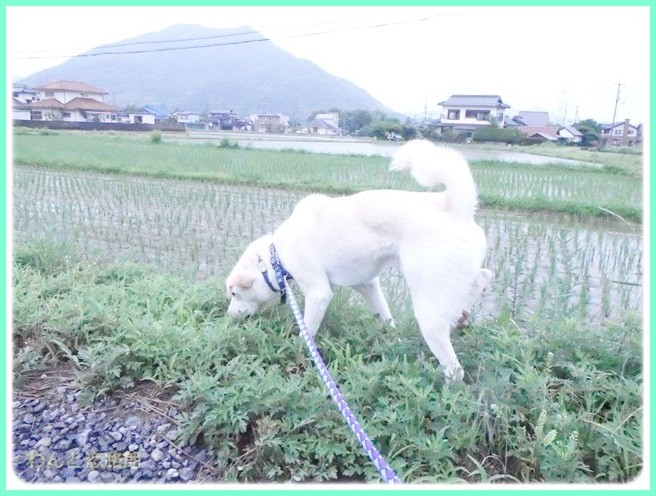 f:id:yasukazu01:20140618213819j:image