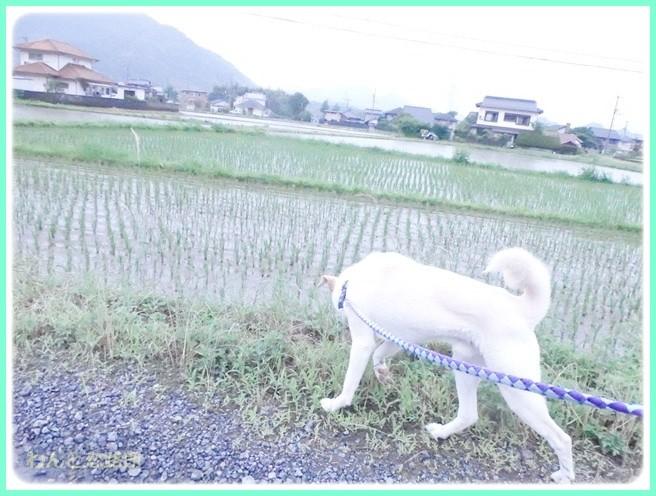 f:id:yasukazu01:20140618213820j:image