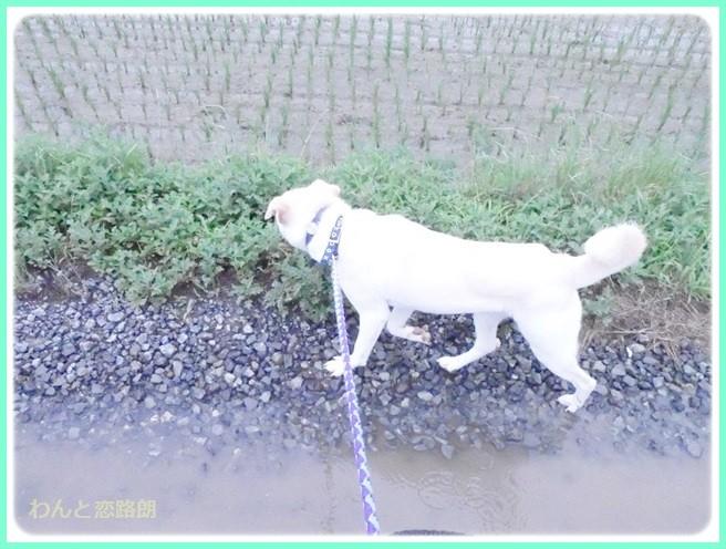 f:id:yasukazu01:20140618213821j:image