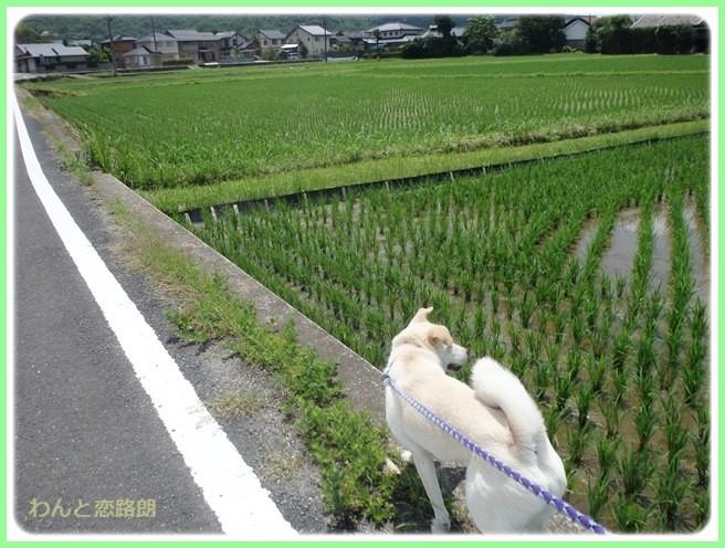 f:id:yasukazu01:20140624203531j:image