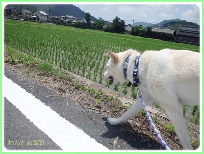 f:id:yasukazu01:20140624203810j:image