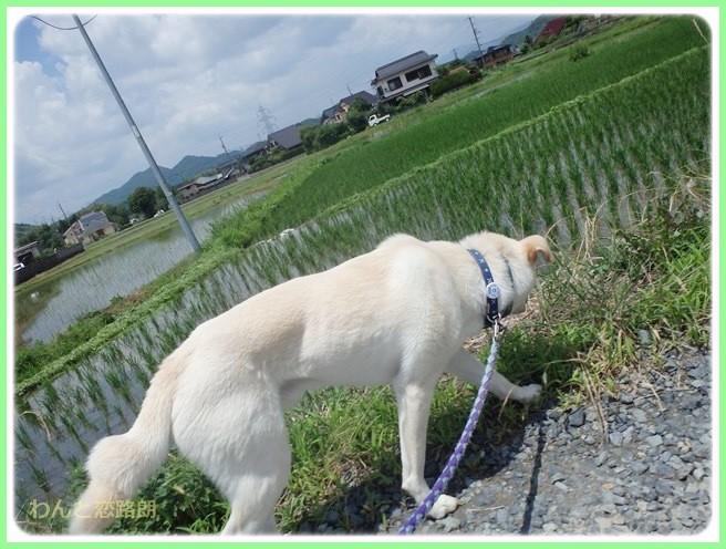 f:id:yasukazu01:20140624203811j:image