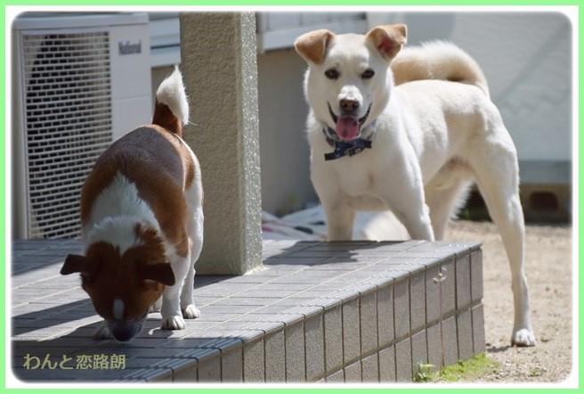 f:id:yasukazu01:20140626222811j:image