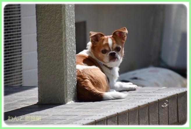f:id:yasukazu01:20140628222505j:image
