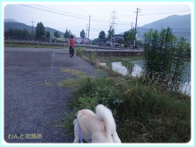 f:id:yasukazu01:20140629203412j:image