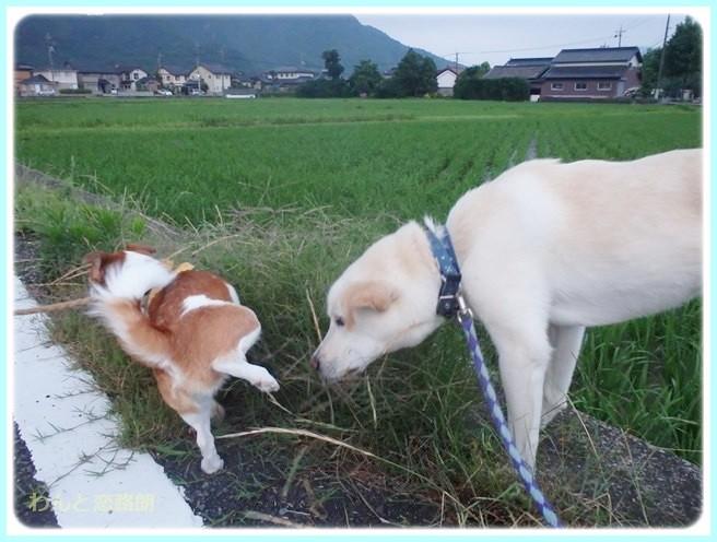 f:id:yasukazu01:20140629203414j:image